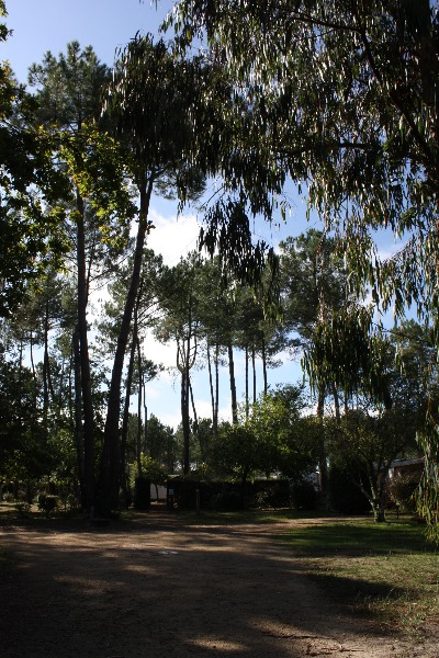 Camping Parc du Bel Air   Vielle Saint Girons
